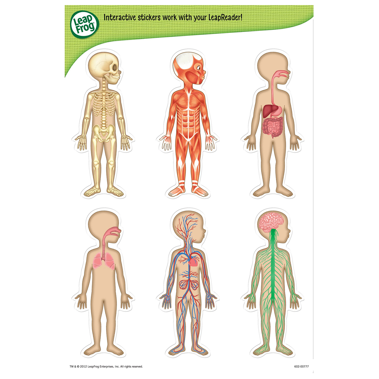 Leapreader Human Body Chart Leapreader Prima Toys