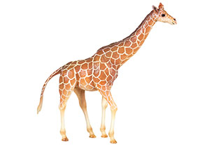 National Geographic Safari Figures - Assorted