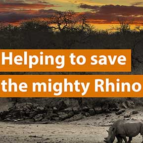 Rhino Coin Bank helps raise funds for Wildlife ACT